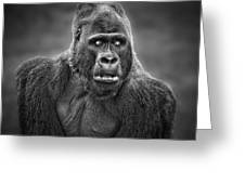 Portrait Of King Kongs Cousin IIi Greeting Card