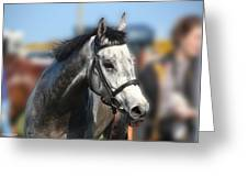 Portrait Of The Grey Race Horse Greeting Card