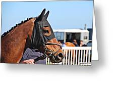 Portrait Of The Horse In The Hood Greeting Card