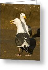 Portrait Of Two Seagulls On A Beach Greeting Card