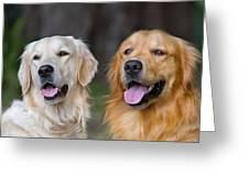 Portrait Of Two Young Beauty Dogs Greeting Card