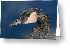 Portrait Of Young Canada Goose Greeting Card