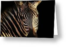 Portrait Of Zebra Greeting Card