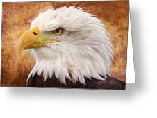 Portrait Of A Bald Eagle Greeting Card