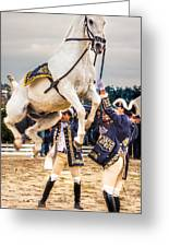Portugal Lusitano Horse Greeting Card