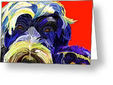 Portugese Water Dog 1 Greeting Card