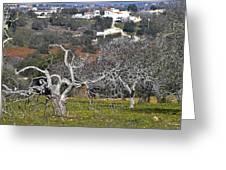 Portuguese Almond Plantation Greeting Card