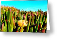 Portuguese Coastal Plants  Greeting Card