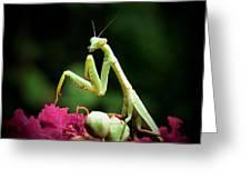 Poser Greeting Card