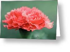 Posh Carnation Greeting Card