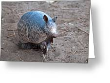Posing Armadillo Greeting Card
