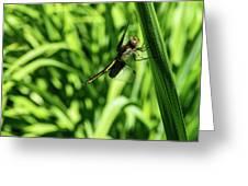 Posing Dragonfly 2 Greeting Card