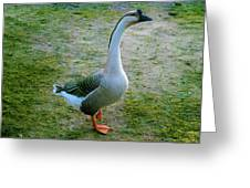 Posing Goose Greeting Card