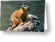 Posing Meerkat Greeting Card