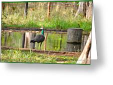 Posing Peahen Greeting Card