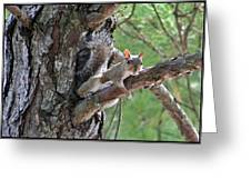 Posing Squirrel Greeting Card