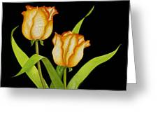Posing Tulips Greeting Card
