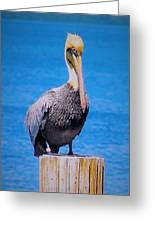 Posted Pelican Greeting Card