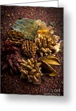 Potpourri Greeting Card