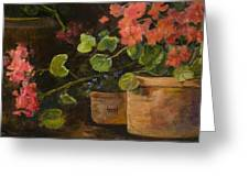Pots Of Geraniums Greeting Card