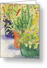 Potted Beauties  Greeting Card