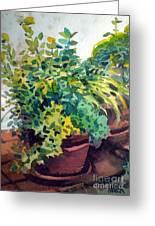 Potted Herbs Greeting Card