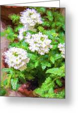 Potted Lantana Impression Greeting Card