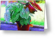 Potted Plant Greeting Card