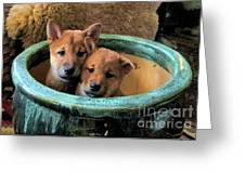 Potted Puppies Greeting Card