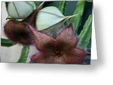 Potted Starfish Greeting Card