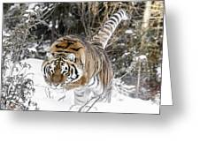 Pounced Greeting Card