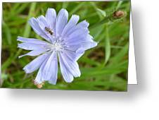 Powder Blue Chicory Greeting Card