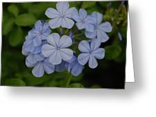 Powder Blue Flowers Greeting Card
