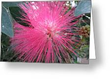 Powder Puff Tree Greeting Card