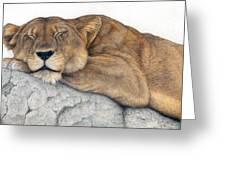 Power And Grace At Rest Greeting Card by Pat Erickson