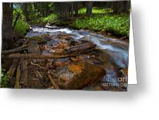 Powerful Spring Runoff Greeting Card