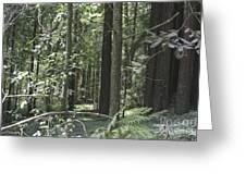 pr 138 - Frolicking Trees Greeting Card