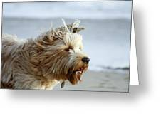pr 210 - The Shaggy Dog Greeting Card