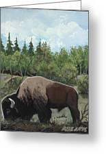 Prairie Bison Greeting Card