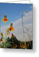 Prairie Cone Flowers Against Blue Sky Vertical Number Two Greeting Card