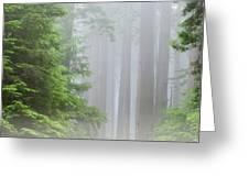 Prairie Creek State Park Greeting Card