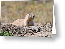 Prairie Dog  9255 Greeting Card