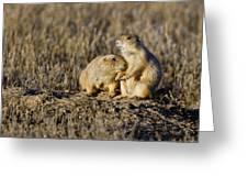 Prairie Dog Couple Greeting Card