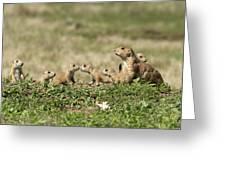 Prairie Dog Family 7270 Greeting Card