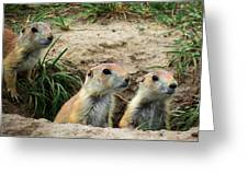 Prairie Dog Family Greeting Card