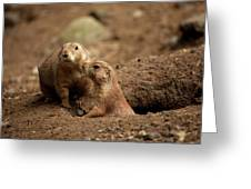 Prairie Dogs Greeting Card