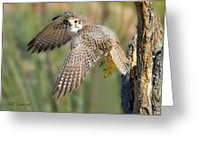 Prairie Falcon Taking Flight Greeting Card