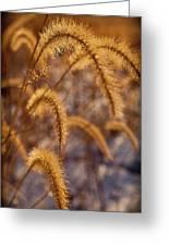 Prairie Grass Detail Greeting Card