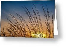 Prairie Grass Sunset Greeting Card