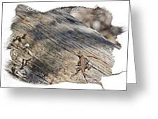 Prairie Lizard _ 1b Greeting Card
